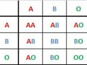 English: ABO Blood Group System