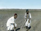 Egypt: Fellahin in the Fields, Cairo