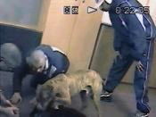 Gang members dog fighting in a vacant office building