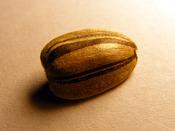 English: A super micro image of a 1.3 centimeter long striped sunflower seed. Español: Micro fotografía de 1.3 centímetros de longitud de una semilla de girasol