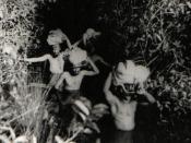 Cláudio e Orlando em busca dos Kalapalo (década de 40)