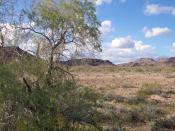 English: The Sonoran Desert near Yuma, Arizona in 2005.