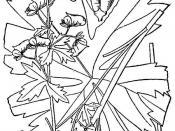 Trailing White Monkshood (Aconitum reclinatum)