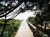 English: A wooden boardwalk to a public beach in Duck, NC.