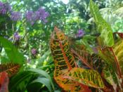 Tropical Flowers and Plants, Micronesia