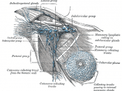 Lymphatics of the axillary region