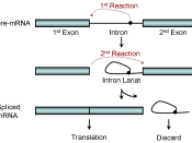 Cartoon illustrating the two-step chemistry of mRNA splicing.