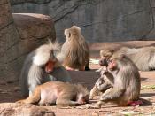 group behavior || Gruppenverhalten