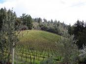 English: Vineyard in the Santa Cruz Mountains.