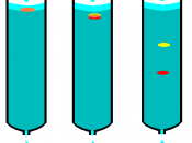 Chromatography column with sample in three different stages
