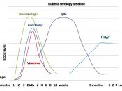 Serology timeline of congenital rubella