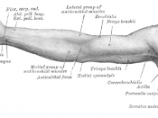 Front of right upper extremity.