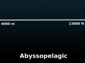Scale diagram of the layers of the pelagic zone