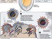 Flu Vaccine: Reassortment
