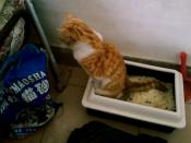 a cat and a Litter box