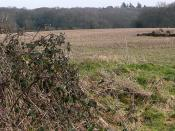 English: Sandleford Warren Readers of Watership Down, by Richard Adams, will know that the book starts with the potential redevelopment of the area around the warren. This is it; by those trees is the warren that Fiver and friends had to leave to start th