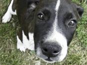 Domestic puppy close-up.