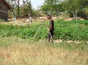 Fertilization of a crop field