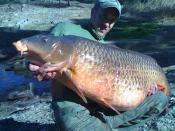 Spanish Record common 34.5kg