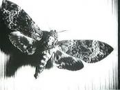 Image of moth from