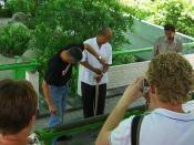 Snake Handler at Bangkok Snake Farm taking venom out of King Cobra