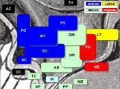 Hypothalamic nuclei