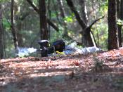 English: A yellow team Soldier gets low during a paintball game. The 988th Military Police Company participated in paintball as part of the Warrior Adventure Quest program.