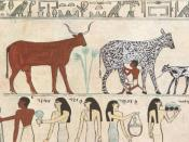Old Egyptian hieroglyphic painting showing an early instance of a domesticated animal (cow being milked).