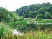 English: Far Pastures. A nature reserve home to newly released Red Kites