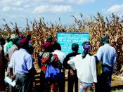 In an effort to reduce corn stem-borer infestations, corporate and public researchers partner to develop local [transgenic] Bt (Bacillus thuringiensis) corn varieties suitable for Kenya.