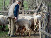 Self Sufficiency in Transylvania