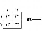 English: Homozygous cross tree method. Alternate method for dihybrid and multihybrid crosses