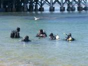 Scuba diving class I photographed in Monterey, California