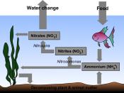 Diagram of the nitrogen cycle in an aquarium. Drawn in Sodipodi by Ilmari Karonen, SVG original available at http://vyznev.net/misc/Aquarium_Nitrogen_Cycle.svg.