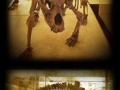 Cave bear- Ursus Spelaeus