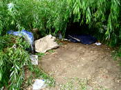 English: A homeless person's shelter under a fallen Willow tree along in New South Wales, Australia.