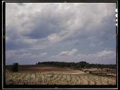 Corn field, Ga.?  (LOC)