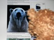 bear chat rooms