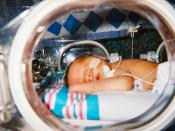A human infant sleeps in his incubator at a neonatal intensive care unit. Photo by Chris Horry at Arnold Palmer Hospital in Orlando, Florida, November 2002. (The infant is now a healthy two year old.)