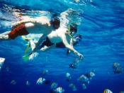 A group of snorkelers observing undersea wildlife. Cozumel, Mexico, January 2004.