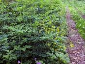 Shenandoah Appalachian Trail #3