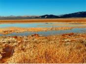 Harper Lake Marsh in the Mojave National Preserve