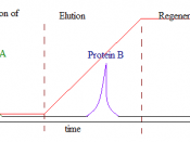 English: Chromatogram depicting the 4 main stages of Ion Exchange Chromatography. Protein A carries the same charge as the stationary phase and does not bind. Protein B binds and is later eluted from the stationary phase.