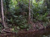Tropical Rainforest on Tioman
