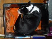 Nettie in box in office