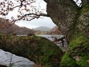 English: Ullswater and a Mossy Oak