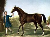 Purebred Arabian stallion and one of the foundation sires of the Thoroughbred breed