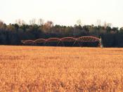 English: Soybeans ready for harvest, with center pivot irrigation setup, Orangeburg County, South Carolina