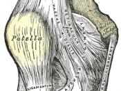 English: Right knee-joint. Anterior view. Deutsch: rechtes Kniegelenk