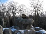 Franklin Park Zoo, Boston, January 2009